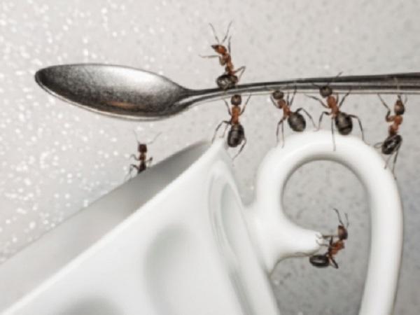 Como acabar com as formigas da sua casa
